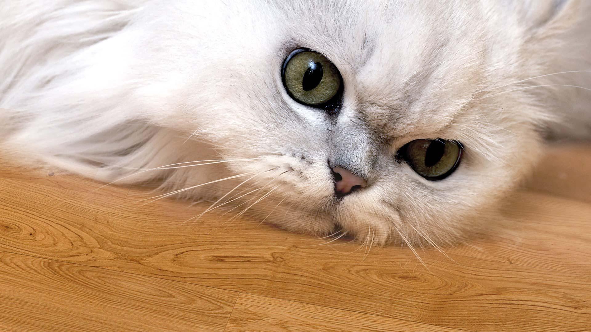 Massivholzdielen Katze